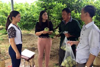 Khai thác sản phẩm nông nghiệp: Hướng đi mới trong phát triển du lịch Xứ Lạng