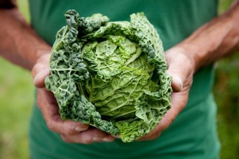 Lợi ích sức khỏe của bắp cải