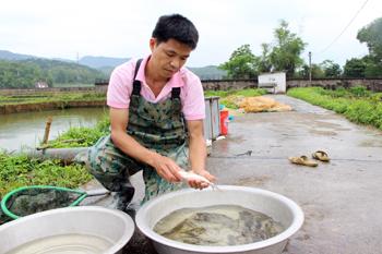 Tích cực phòng chống dịch bệnh thủy sản