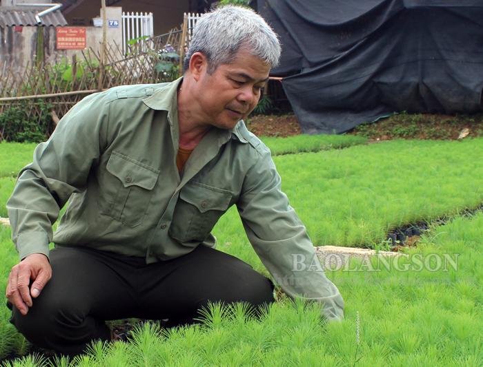 Cựu chiến binh phát triển kinh tế từ ươm cây giống