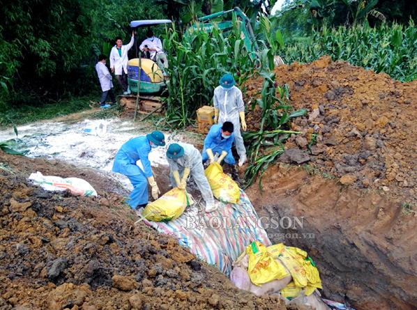 Tràng Định: Dồn lực ngăn dịch tả lợn Châu Phi; cúm gia cầm A/H5N6