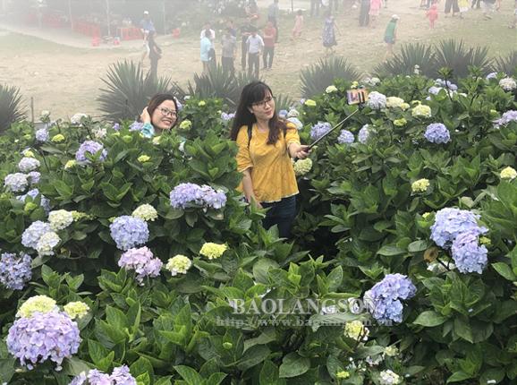 Mẫu Sơn mùa hoa cẩm tú cầu