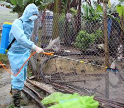 Đình Lập: Khống chế bệnh dịch tả lợn châu Phi, phòng dịch lợn tai xanh