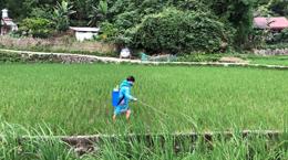Nông dân thờ ơ với bảo hộ khi sử dụng thuốc bảo vệ thực vật