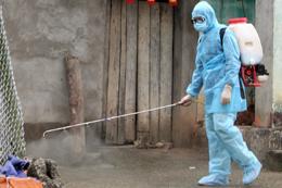 Hợp tác xã chăn nuôi lợn: Lao đao vì bệnh dịch tả lợn châu Phi