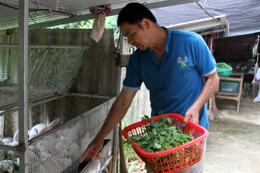 Bắc Sơn: Triển vọng kinh tế từ nuôi thỏ