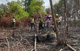 Tràng Định: Khó khăn trong bảo vệ  rừng