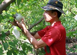 Chủ động chăm sóc cây trồng, vật nuôi mùa nắng nóng
