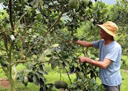 Hỗ trợ phát triển sản xuất ở Bắc Sơn: Hiệu quả chưa cao