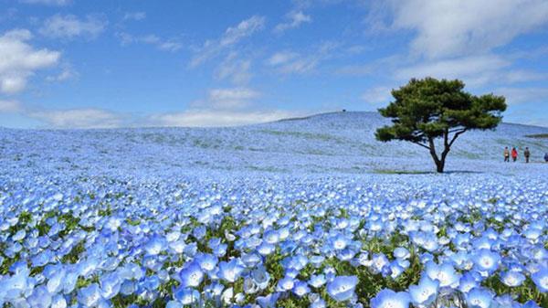 Ghé thăm Ibaraki, Nhật Bản - thiên đường du lịch và dưa lưới