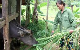 Hội Nông dân Bắc Sơn: Phát huy hiệu quả Quỹ hỗ trợ nông dân