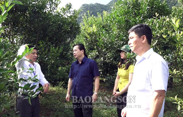 Giám sát tình hình triển khai thực hiện một số nghị quyết của HĐND tỉnh tại Bắc Sơn