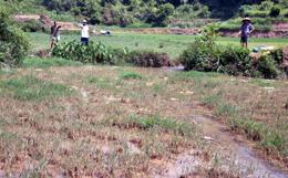 Cần khắc phục ô nhiễm đất canh tác nông nghiệp tại thôn Yên Sơn