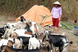Hữu Lân: Phát triển chăn nuôi gia súc