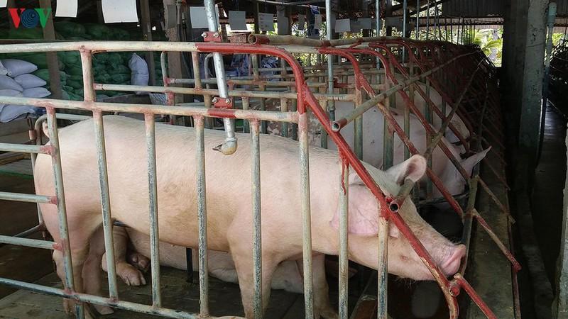 Giá thịt lợn hơi tại miền Bắc có thể tiếp tục tăng