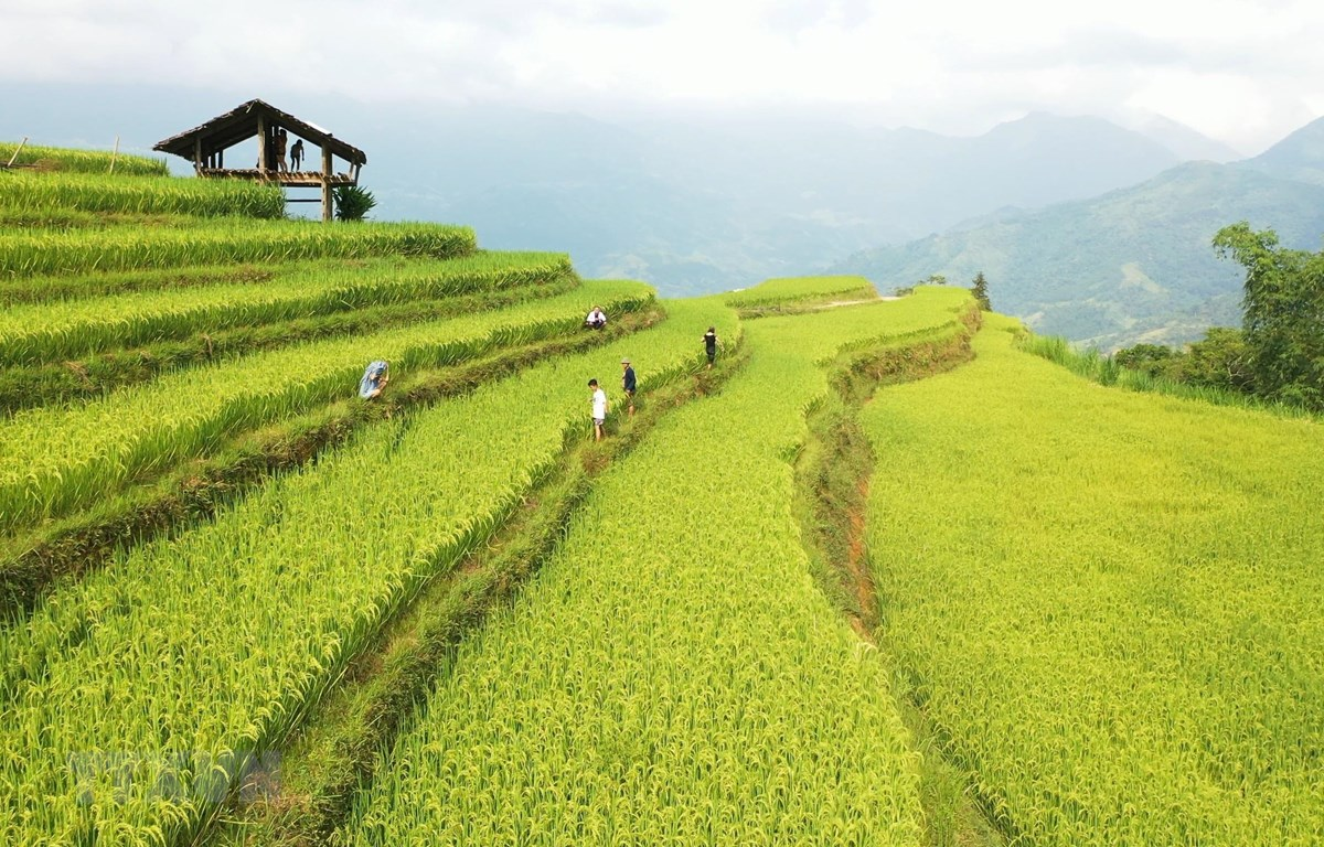 Hướng tới phát triển du lịch bền vững ở Hoàng Su Phì