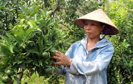 Tân Thành: Nâng cao thu nhập từ mô hình phát triển sản xuất