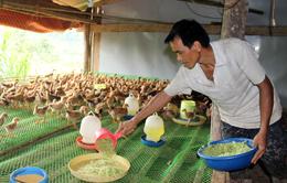 Đổi mới hình thức tổ chức sản xuất: Phát huy vai trò của các hợp tác xã nông nghiệp