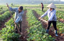 Công ty TNHH Đầu tư Vũ Đại Hùng: Tiên phong sản xuất rau theo hướng hữu cơ