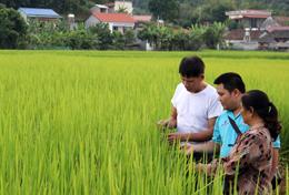 HTX Nông sản sạch Tràng Định: Điểm sáng liên kết tiêu thụ nông sản, đặc sản