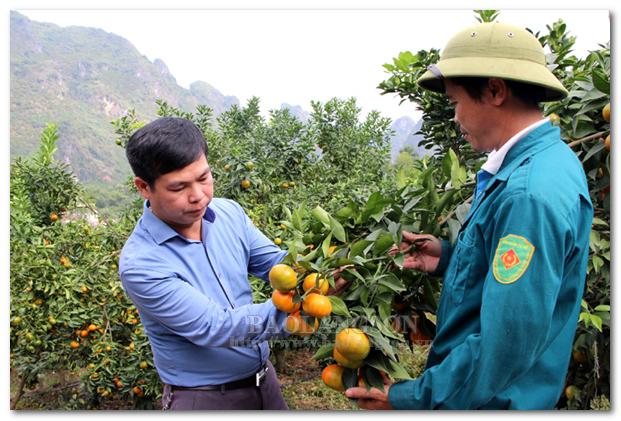 Tập trung phát triển vùng cây ăn quả chủ lực