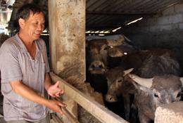 Chủ động phòng chống đói rét cho gia súc