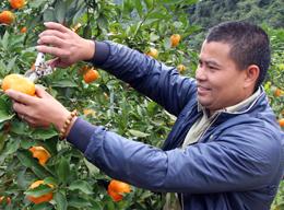 Bắc Sơn tập trung phát triển sản phẩm nông nghiệp chủ lực