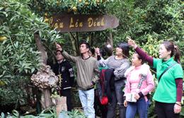 Bắc Sơn: Phát triển vùng quýt gắn với du lịch
