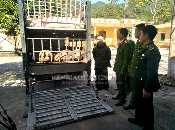 Bắt vụ vận chuyển trái phép 2,5 tấn lợn sang Trung Quốc
