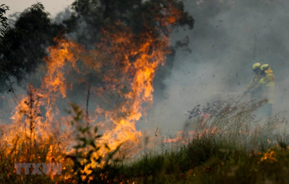 Nhiệt độ dự báo tăng cao, cháy rừng ở Australia có nguy cơ lan rộng