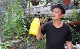 Làm giàu từ trồng hoa lan rừng