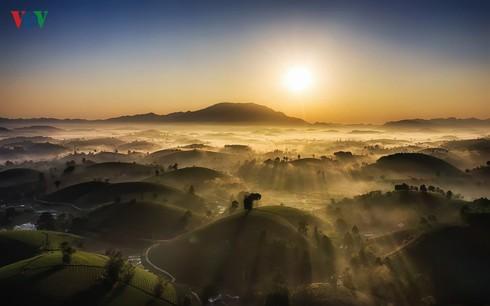 Đồi chè Long Cốc đẹp mê hồn trong ánh bình minh