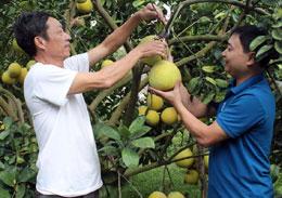 Phát triển kinh tế tập thể: Sức vươn của các hợp tác xã nông nghiệp