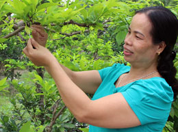 Ngành nông nghiệp: Một năm vượt khó