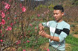 Thành phố Lạng Sơn: Sẵn sàng khai hội hoa đào