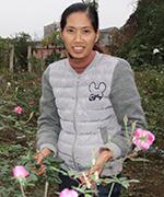 Làm giàu từ hoa hồng