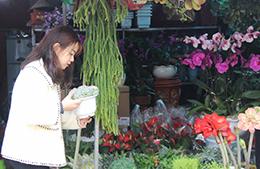 Sôi động thị trường hoa, cây cảnh trang trí tết