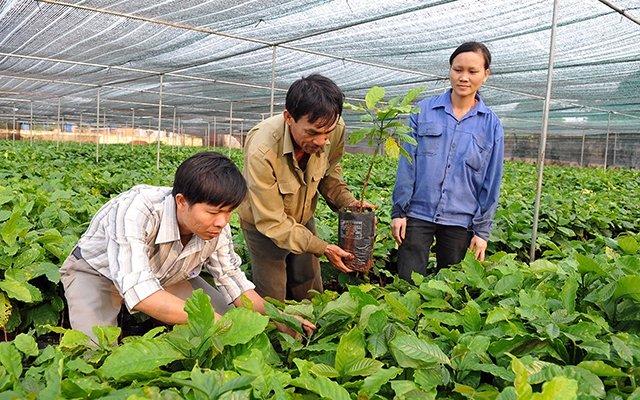 Đẩy mạnh nghiên cứu cây giống, con giống chất lượng cao
