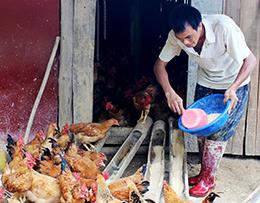 Xây dựng nông thôn mới: Phát huy vai trò hợp tác xã nông nghiệp