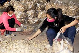 Công ty TNHH MTV Nông nghiệp Vigia: Nâng cao hiệu quả sản xuất, tiêu thụ khoai tây