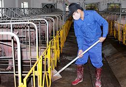 Phòng, chống dịch bệnh trong chăn nuôi: Cách làm ở Hợp tác xã An Hồng