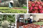 """""""Lối thoát"""" cho nông sản Việt giữa dịch vẫn là bài toán khó"""