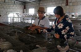 Chăn nuôi theo hướng trang trại, gia trại: Triển vọng phát triển kinh tế bền vững ở Bắc Sơn