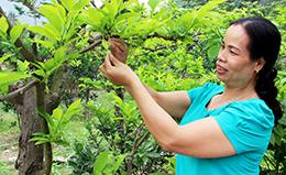 Nâng cao chất lượng cán bộ tại huyện Chi Lăng: Hiệu quả từ một nghị quyết