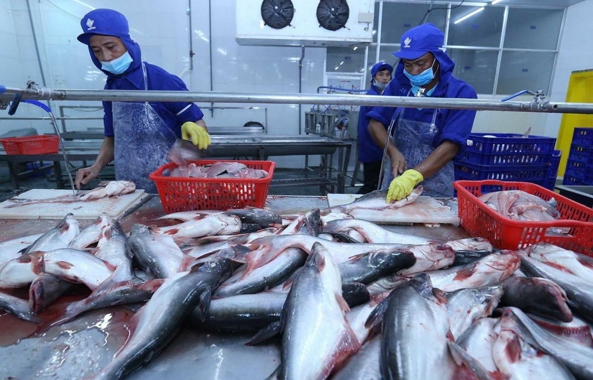 Kim ngạch xuất khẩu cá tra trong năm tháng giảm 39%