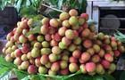 9 tấn quả vải U hồng của Việt Nam sắp nhập cảng Australia