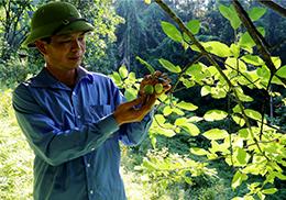 Thanh Long: Triển vọng kinh tế từ trồng cây táo mèo