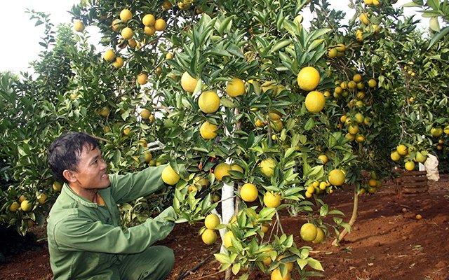 Sản xuất nông nghiệp theo nhu cầu thị trường
