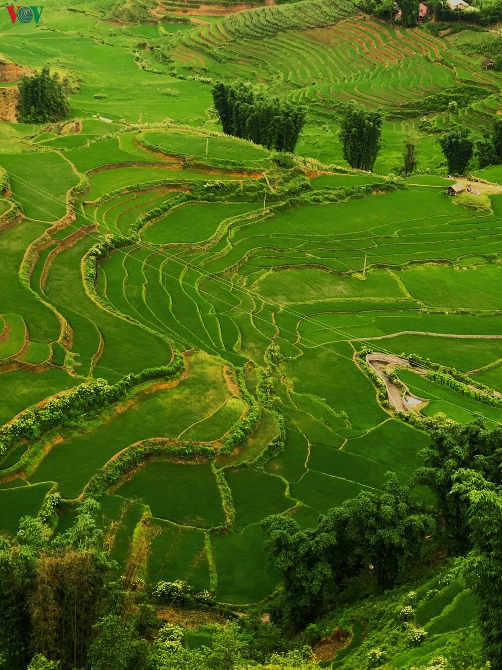 Vẻ đẹp lãng mạn của thung lũng Mường Hoa nhìn từ cáp treo Fansipan