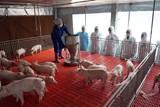 Khẩn trương ngăn chặn dịch tả lợn châu Phi tái phát, lây lan diện rộng